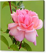 Pink Gem Canvas Print