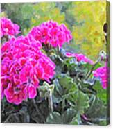 Pink Geraniums And Butterfly Canvas Print