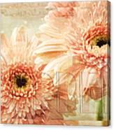 Pink Gerber Daisies 3 Canvas Print