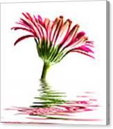 Pink Gerbera Flood 2 Canvas Print