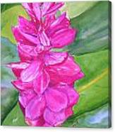 Pink Ginger Canvas Print