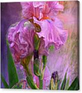 Pink Goddess Canvas Print