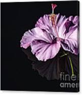 Pink Hibiscus On Black Water Canvas Print