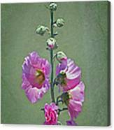 Pink Hollyhocks Canvas Print