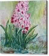 Pink Hyacint Canvas Print