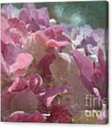 Pink Hydrangea Photoart I Canvas Print