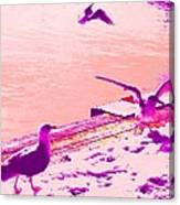When Seagulls Are Living The Pink Life  Canvas Print