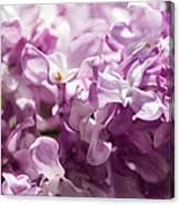 Pink Lilacs Closeup - Featured 3 Canvas Print