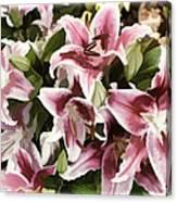 Pink Lilies I Canvas Print