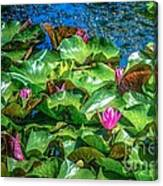 Pink Lilly Flowers And Pads Canvas Print