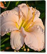 Pink Lily At Sunset 1 Canvas Print