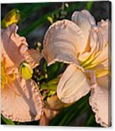 Pink Lily At Sunset 2 Canvas Print