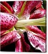 Pink Lily Macro Canvas Print