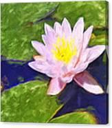 Pink Lotus At Waikoloa Canvas Print