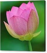 Pink Lotus Bud  Canvas Print