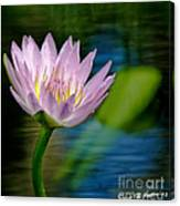 Purple Petals Lotus Flower Impressionism Canvas Print