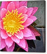 Pink Lotus Flower - Zen Art By Sharon Cummings Canvas Print
