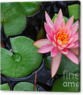 Pink Lotus Love Canvas Print