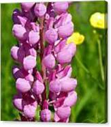 Pink Lupine Flower Canvas Print