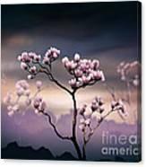 Pink Magnolia - Dark Version Canvas Print