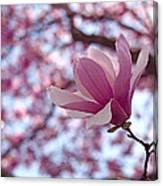 Pink Magnolia Canvas Print