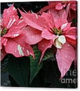 Pink Marble Poinsettia Canvas Print