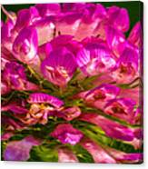 Pink Mystery Flower Canvas Print