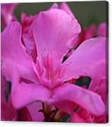 Pink Oleander Flower With Green Leaves In The Background   Canvas Print
