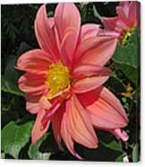 Pink Orange Center Flower Canvas Print