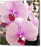 Pink Orchid Duo Canvas Print