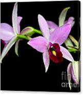 Pink Orchids Cascading Canvas Print