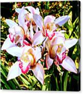 Pink Spirit Orchids Palm Springs Canvas Print