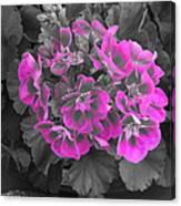 Pink Paridise Canvas Print