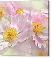 Pink Peony Flowers Parade Canvas Print