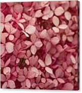Pink Petal Canvas Print