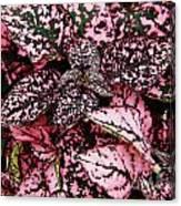 Pink - Plant - Petals Canvas Print