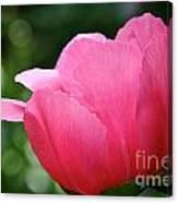 Pink Petals Green Diamonds Canvas Print
