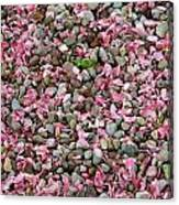Pink Petals On Stones  Canvas Print