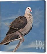 Pink Pigeon Canvas Print