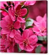 Pink Plum Blossoms Canvas Print