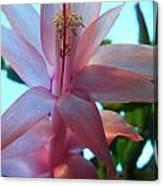 Pink Pollination Canvas Print