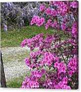 Pink Purple Mississippi Blooms Canvas Print