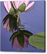 Pink Reflection Canvas Print