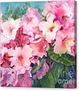 Pink Rhodies On Demand Canvas Print