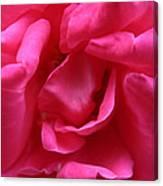 Pink Rose 01 Canvas Print