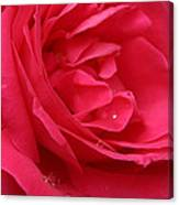 Pink Rose 03 Canvas Print