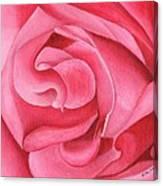 Pink Rose 14-1 Canvas Print