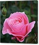 Pink Rose Bud I Canvas Print