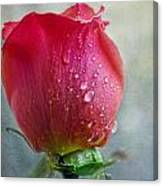 Pink Rose Bud With Drops Canvas Print