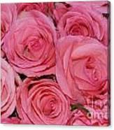Pink Rose Closeup Canvas Print